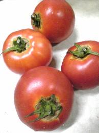 五島さんのトマト.jpg