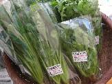 渋谷農園の野菜.jpg