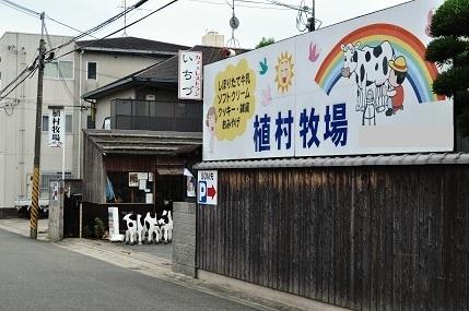 奈良の帰り道:このごろ出会った...